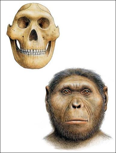 Sejarah Penemuan Fosil Manusia Purba, Manusia Kera dan ...